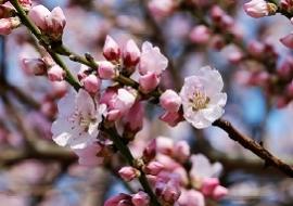 Frühling_Baum